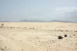 desert-83422_640