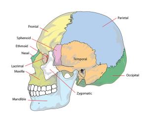 skull-41557_640